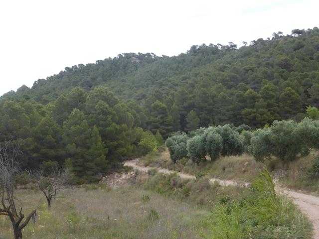 03 Cim51 cami entrant bosc
