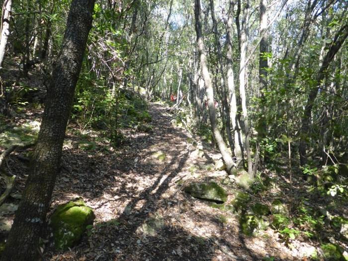 21 Cim61 cami per dins bosc
